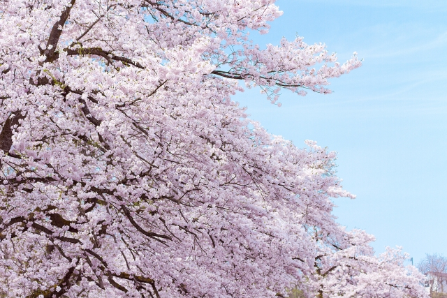 【2020】嵐山観光4月ならではを満喫できるスポットを厳選