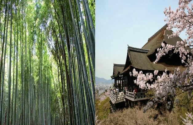 嵐山から清水寺までの行き方は?あなたはどっちは?
