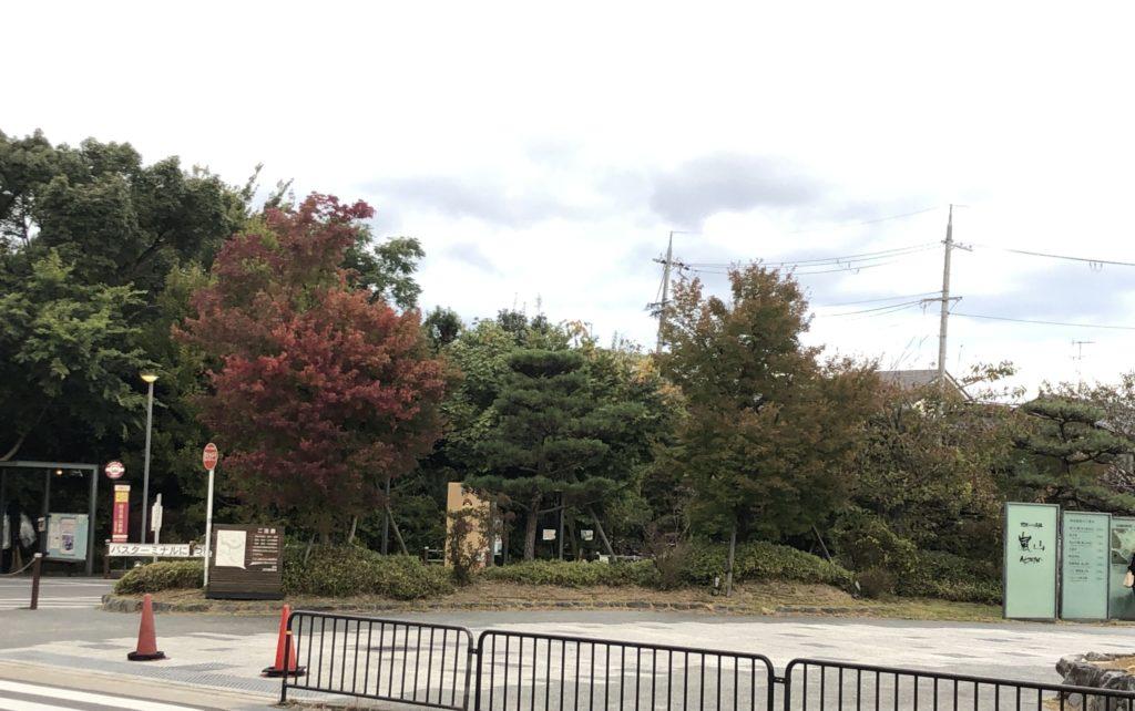 京都 嵐山 紅葉の様子 (2020年10月30日現在)写真画像あり
