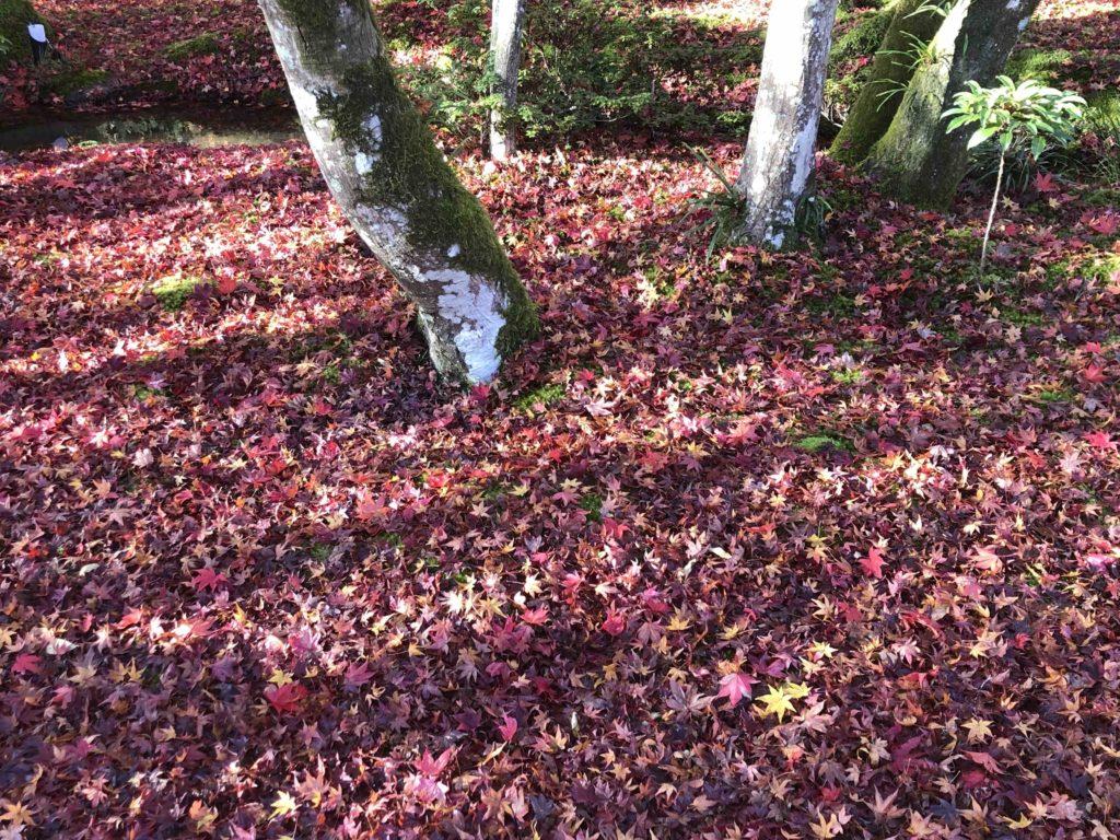 京都嵐山の紅葉2020の時期はいつからいつまで?
