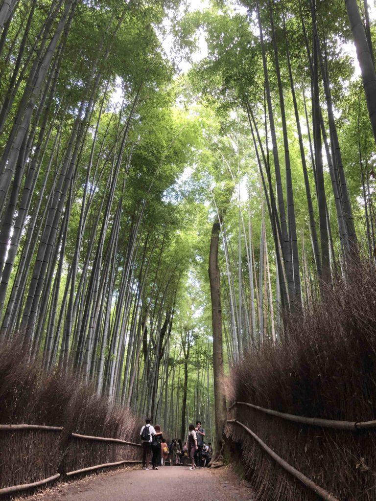 嵐山の竹林の営業時間や開放時間は何時から何時まで?おすすめの時間帯は?